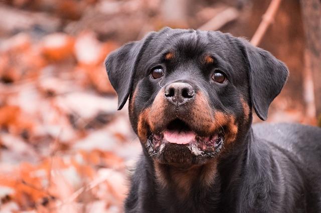 保定市区个人禁养犬只品种名录