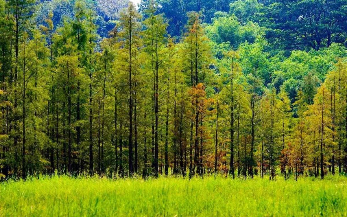 保定市今年计划造林125万亩