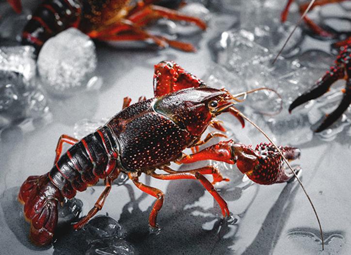 小龙虾怎么清洗?