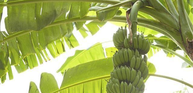 晚上吃香蕉好不好,是否能减肥?提醒:三类食物,也许更有助瘦身